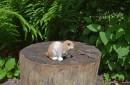 Tuinbeeld-konijn