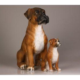 Beeld van een mooie boxer hond