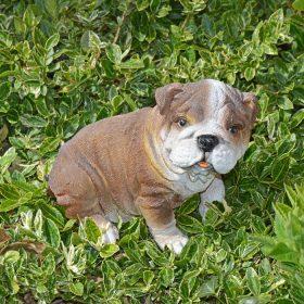 Engelse-bulldog-klein