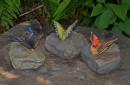 Vlinders-op-rots-als-beeld