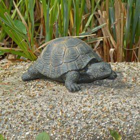 Schildpad beeld