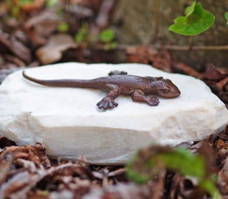 Bronzen salamander