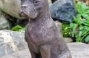 bronzen Deense dog