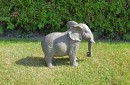 grote-olifant