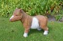 beeld shetlander pony