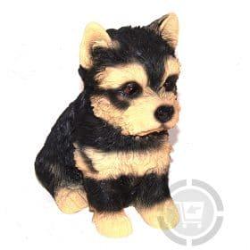Beeld yorkshire pup