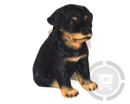 Beeld-rottweiler-pup