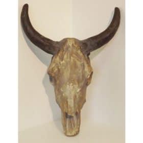 schedel-buffel