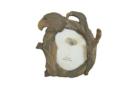 fotolijst adelaar hout