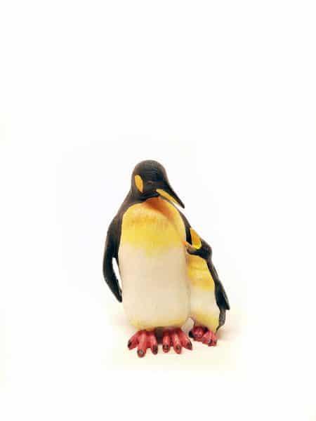 Pinguin beeld