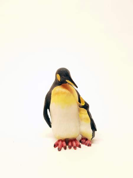 Pinguïn beeld