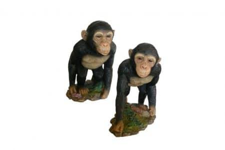 set apen beelden
